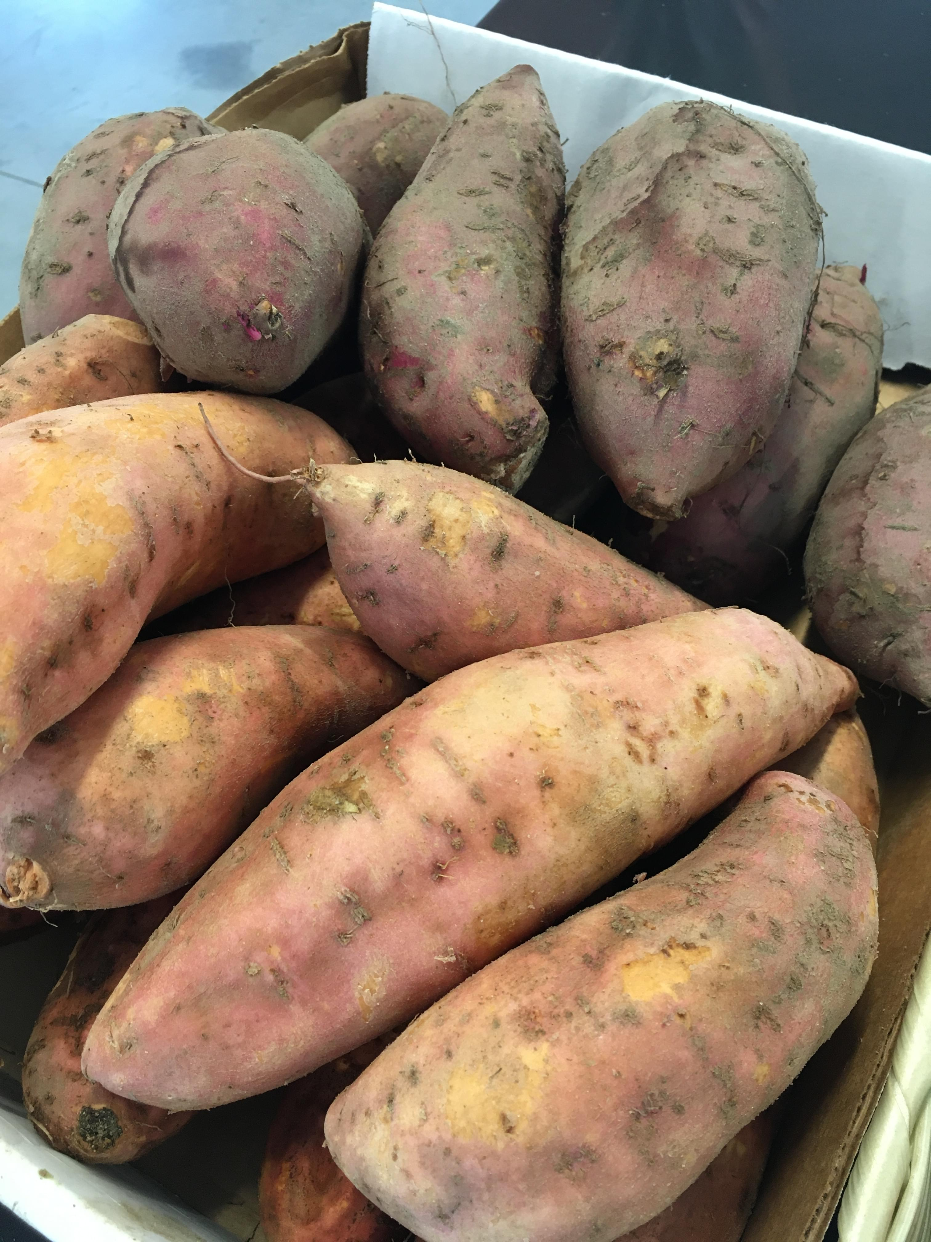 Harvest Season For Sweet Potatoes