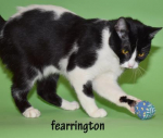 PET OF THE WEEK: Fearrington Powered By Jackson & Sons