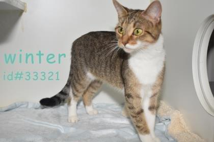 PET OF THE WEEK: Winter Powered By Jackson & Sons