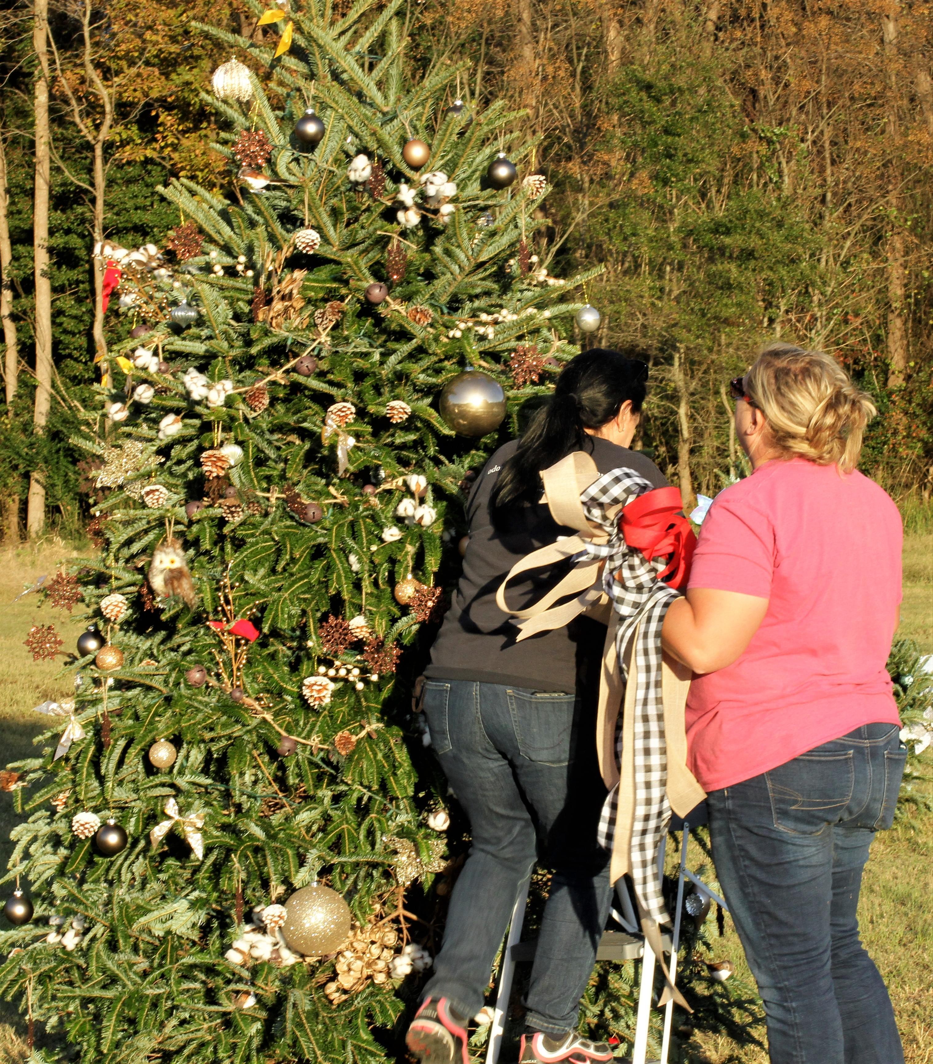 Odom Farm Prepares For Festival Of Trees (PHOTO GALLERY)