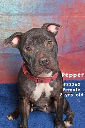 PET OF THE WEEK: Pepper Powered By Jackson & Sons