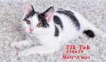 PET OF THE WEEK: Tik Tok Powered By Jackson & Sons