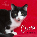 PET OF THE WEEK: Chess Powered By Jackson & Sons