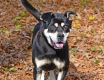 PET OF  THE WEEK: Boone Powered By Jackson & Sons