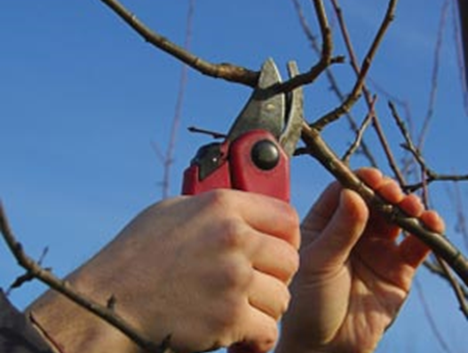 What To Prune Now In The Garden