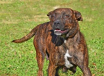 PET OF THE WEEK: Curtsy Powered By Jackson & Sons