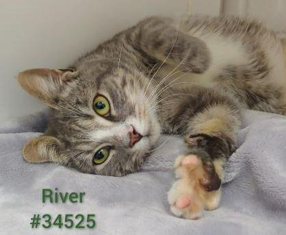 PET OF THE WEEK: River Powered By Jackson & Sons