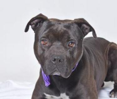 PET OF THE WEEK: Shadow Powered By Jackson and Sons