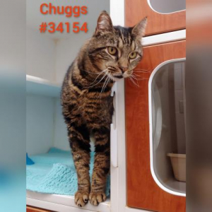 PET OF THE WEEK: Chuggs Powered By Jackson & Sons