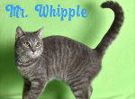 PET OF THE WEEK: Mr. Whipple Powered By Jackson & Sons