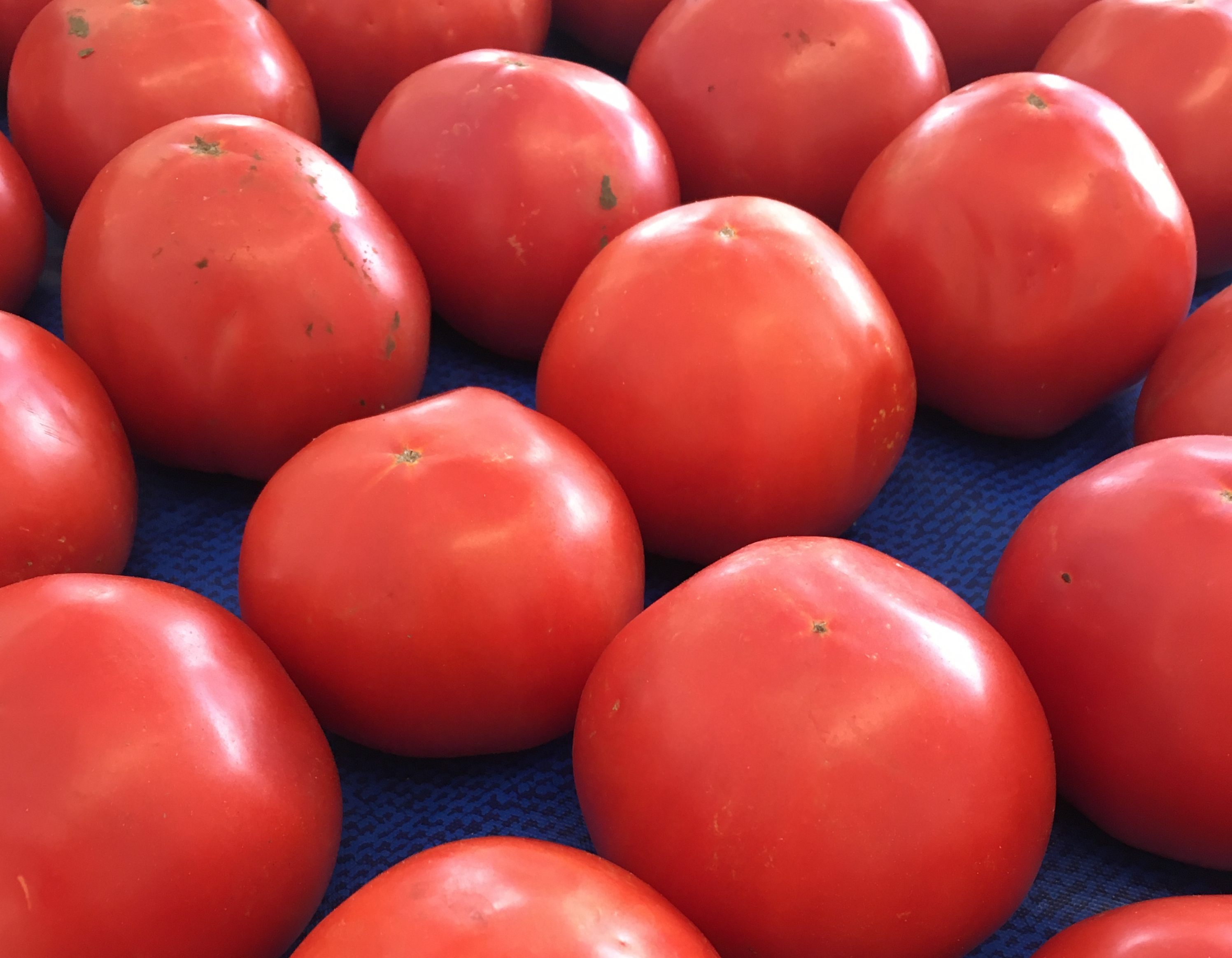 Selecting Tomato Varieties For Your Garden