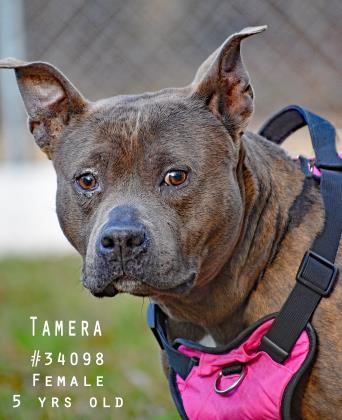 PET OF THE WEEK: Tamera Powered By Jackson & Sons