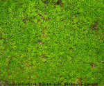 Solving Moss Problems In The Lawn