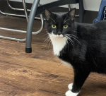 PET OF THE WEEK: Mary Sue Powered by Jackson & Sons