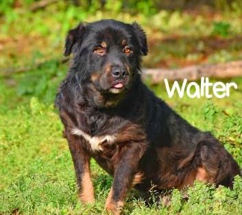 PET OF THE WEEK: Walter Powered By Jackson & Sons