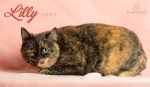 PET OF THE WEEK: Lilly Powered By Jackson & Sons