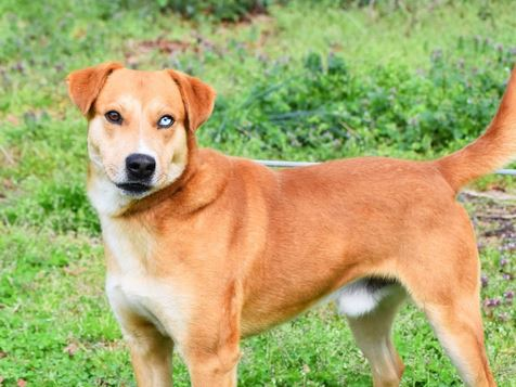 PET OF THE WEEK: Cumberland Powered By Jackson & Sons