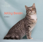 PET OF THE WEEK: Jelly Bean Powered By Jackson & Sons