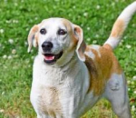 PET OF THE WEEK: Tan Ya Powered By Jackson & Sons