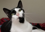 PET OF THE WEEK: Cleopatra Powered By Jackson & Sons