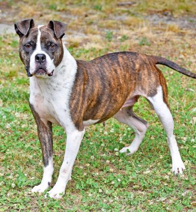 PET OF THE WEEK: Taz Powered By Jackson & Sons