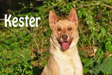 PET OF THE WEEK: Kester Powered By Jackson & Sons