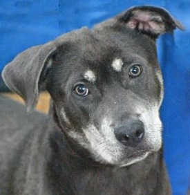 PET OF THE WEEK: Lucia Powered By Jackson & Sons