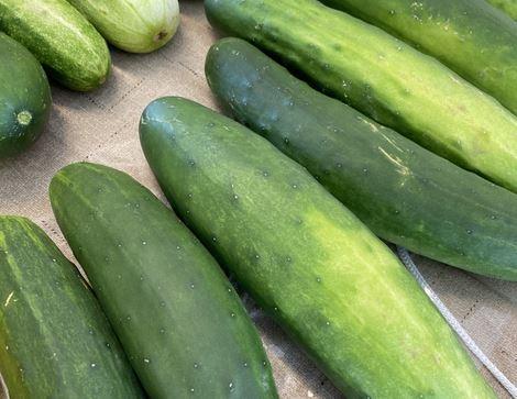 Cucumber Season At The Farm Credit Farmers Market