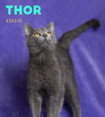 PET OF THE WEEK: Thor Powered By Jackson & Sons