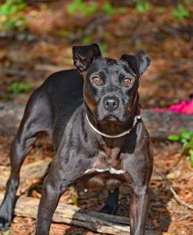 PET OF THE WEEK: Oceania Powered By Jackson & Sons