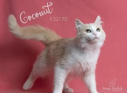 PET OF THE WEEK: Coconut Powered By Jackson & Sons