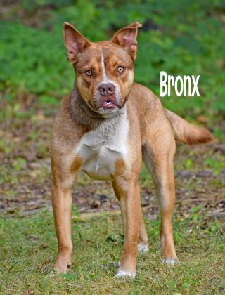PET OF THE WEEK: Bronx Powered By Jackson & Sons