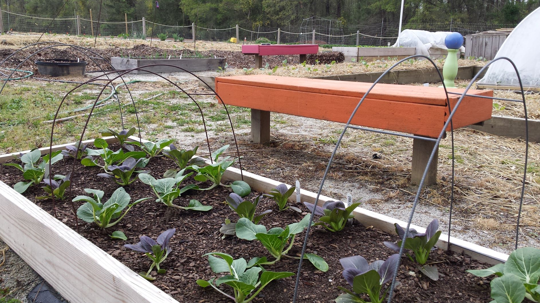 Time To Plant A Fall Vegetable Garden
