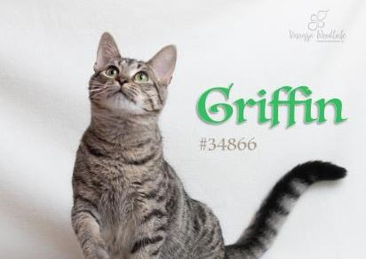 PET OF THE WEEK: Griffin Powered By Jackson & Sons