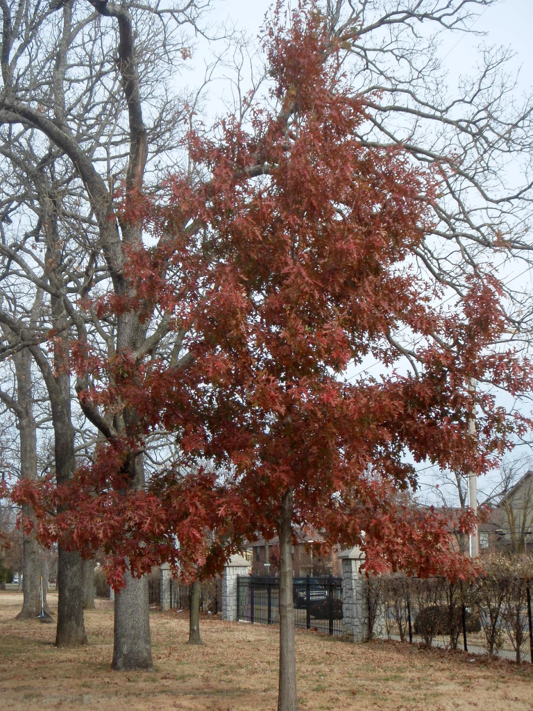 Fall Is The Time To Plant Trees & Shrubs