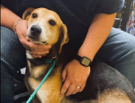 PET OF THE WEEK: Duncan Powered By Jackson & Sons
