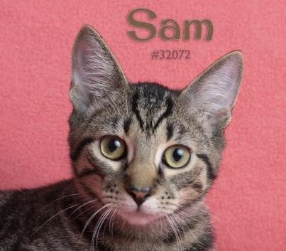 PET OF THE WEEK: Sam Powered By Jackson & Sons