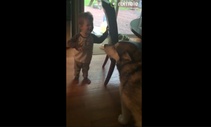 Watch the Epic Howl Off Between a Toddler and His Dog [VIDEO]