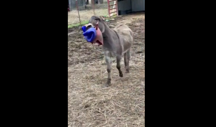 Watch This Adorable DONKEY Get SUPER Happy Over Jolly Ball [VIDEO]