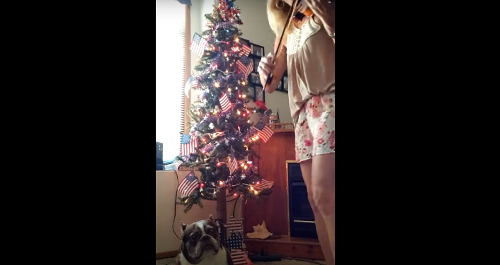 Star Spangled Banner with Kyle the Boston Terrier [WATCH]