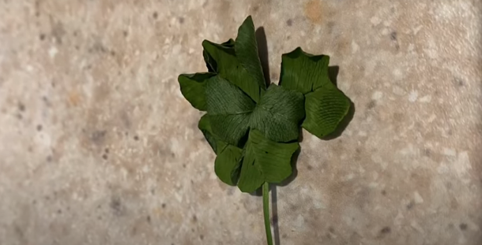 Eight Year Old Virginia Twins Find Seven Leaf Clover [VIDEO]