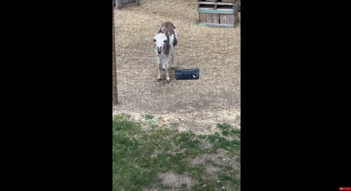 Watch Adorable Donkey Sing Along to Harmonica [VIDEO]