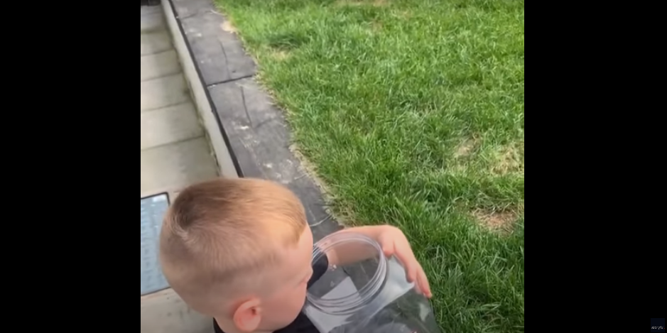 Watch What Happens After Child Releases a Butterfly [VIDEO]