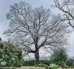 Historic Tree Walk (4/3)