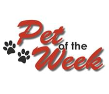 Check out the Hot 100 Pet of the Week