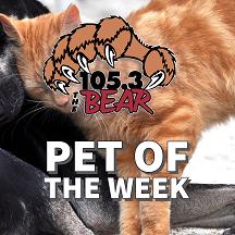 Bear Pet of the Week