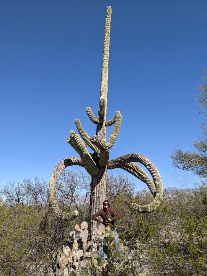 23. Saguaro, AZ