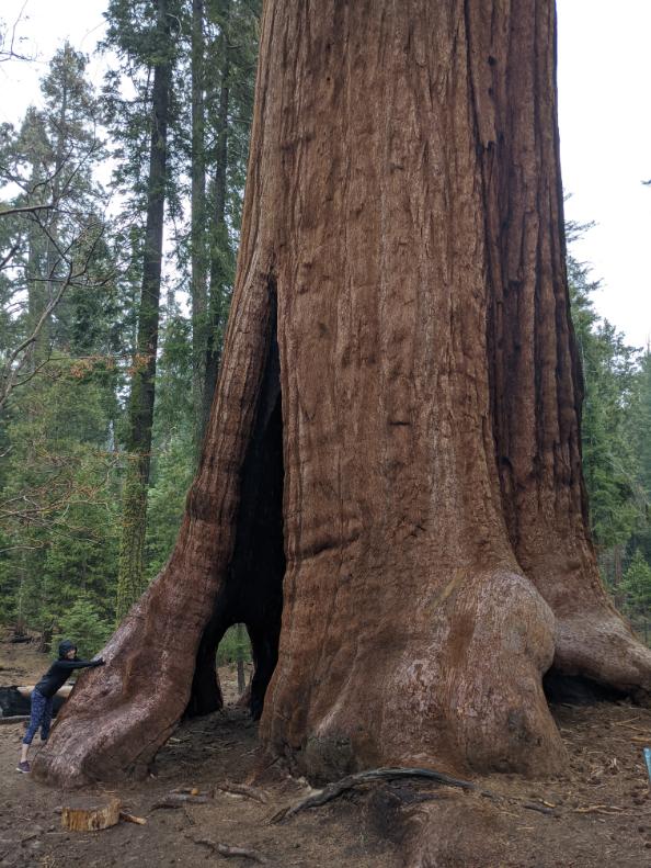 36. Sequoia Forrest, CA