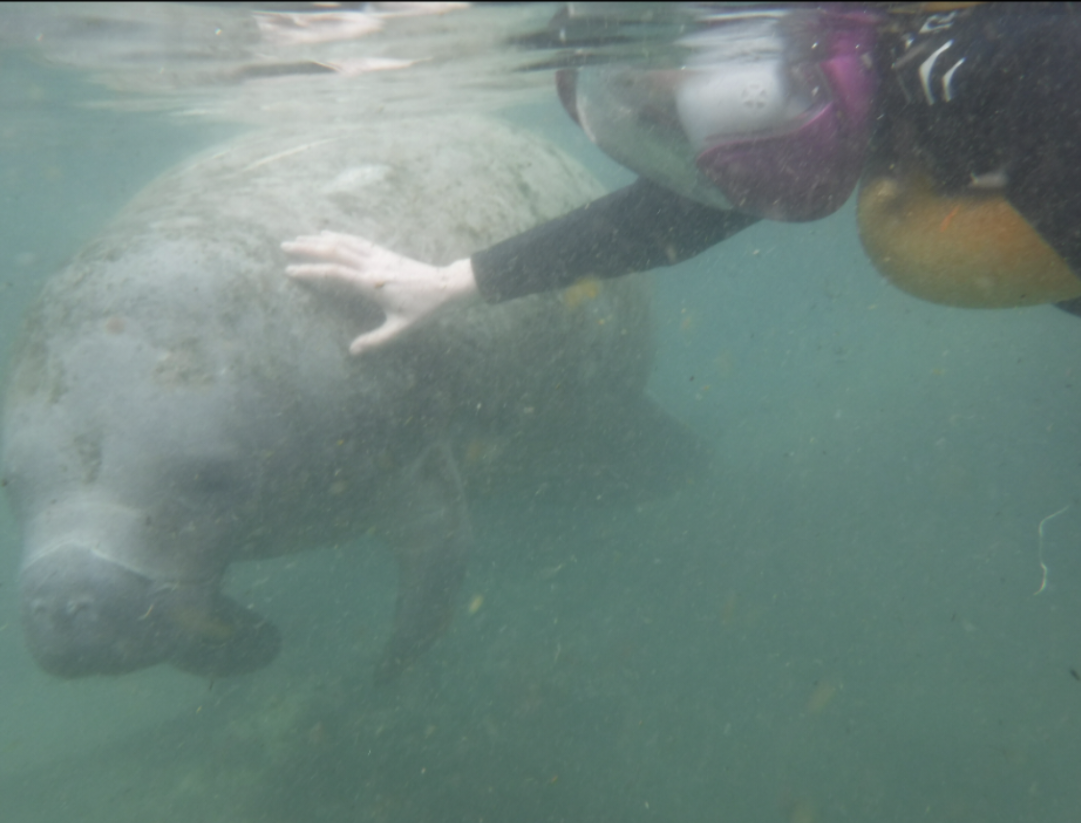 02. Swimming with Manatees in Crystal River, FL
