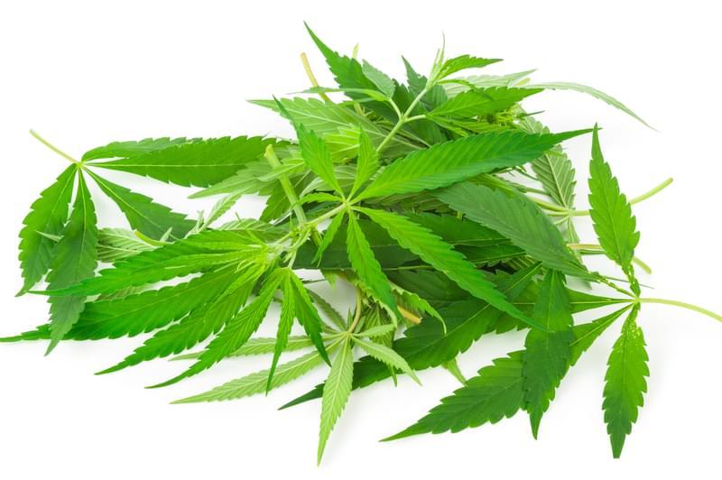 Omaha DEA Division on Marijuana studies and Drug Enforcement